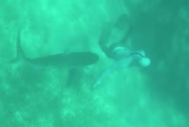 El tiburón se le acercó por la espalda y no se dio cuenta hasta el momento del ataque