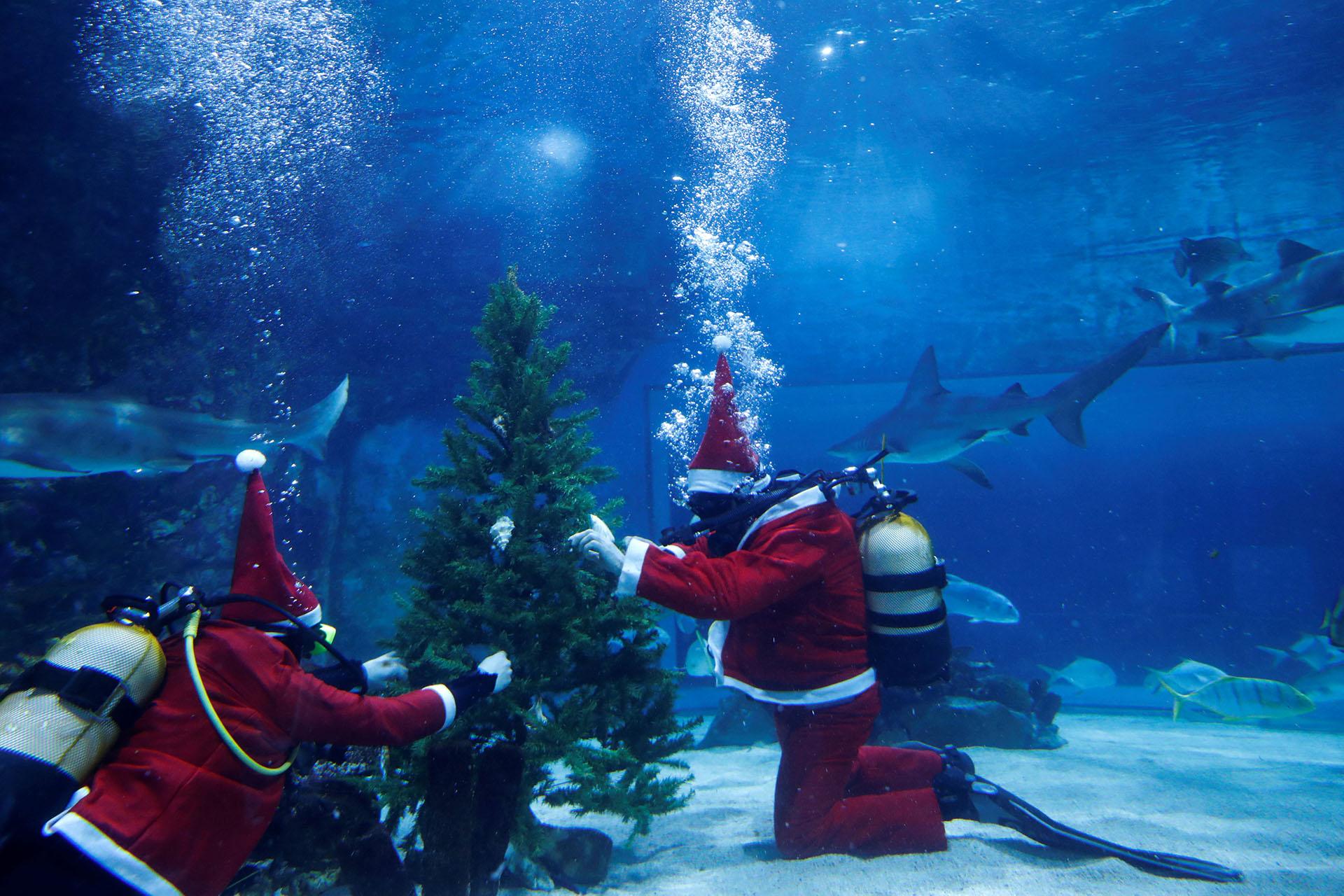 BUDAPEST, HUNGRÍA. El llamativo árbol de navidad en el acuario Tropicarium de Budapest