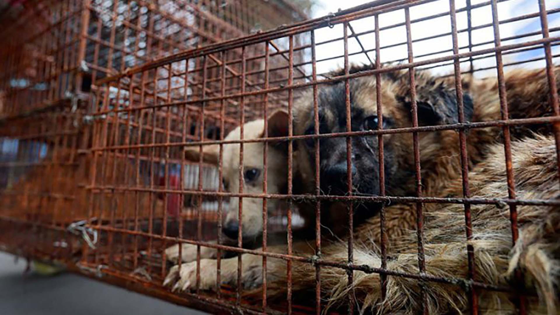 Vecinos y proteccionistas están preocupados por la ordenanza que autoriza la eutanasia de perros sanos, solo por vivir en las calles. (TiempoSur)
