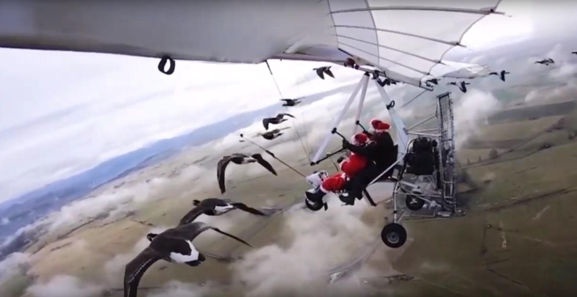 A los gansos no les importó volar junto a Cristian Moullec y su amigo Jacky Herbert en Francia