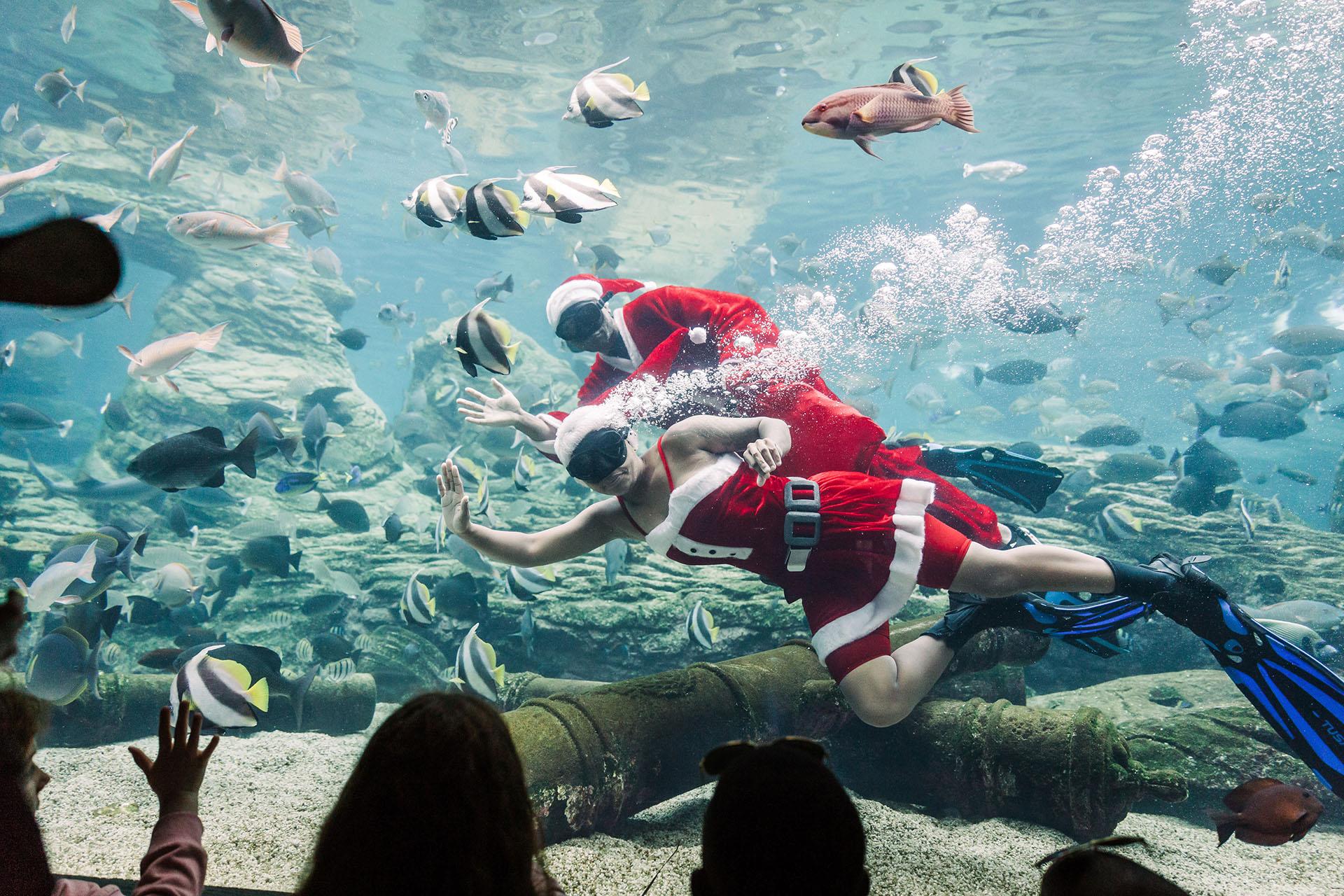 En Sudáfrica también hay buceo con motivos navideños(Photo by RAJESH JANTILAL / AFP)