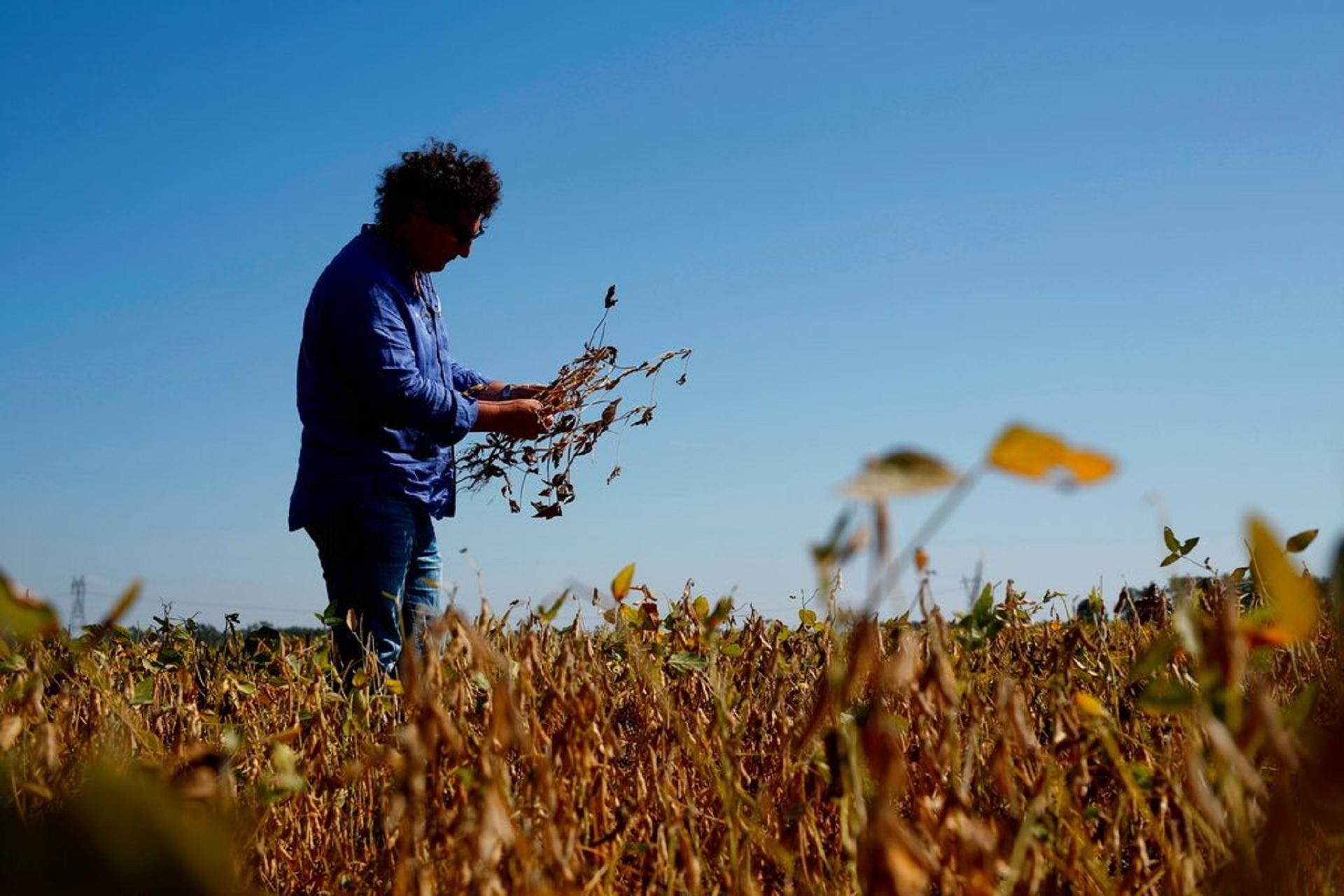 Desde fines de 2017 hasta abril de 2018, fue la peor sequía en 50 años. La cosecha de soja cayó 31% y la de maíz 20%