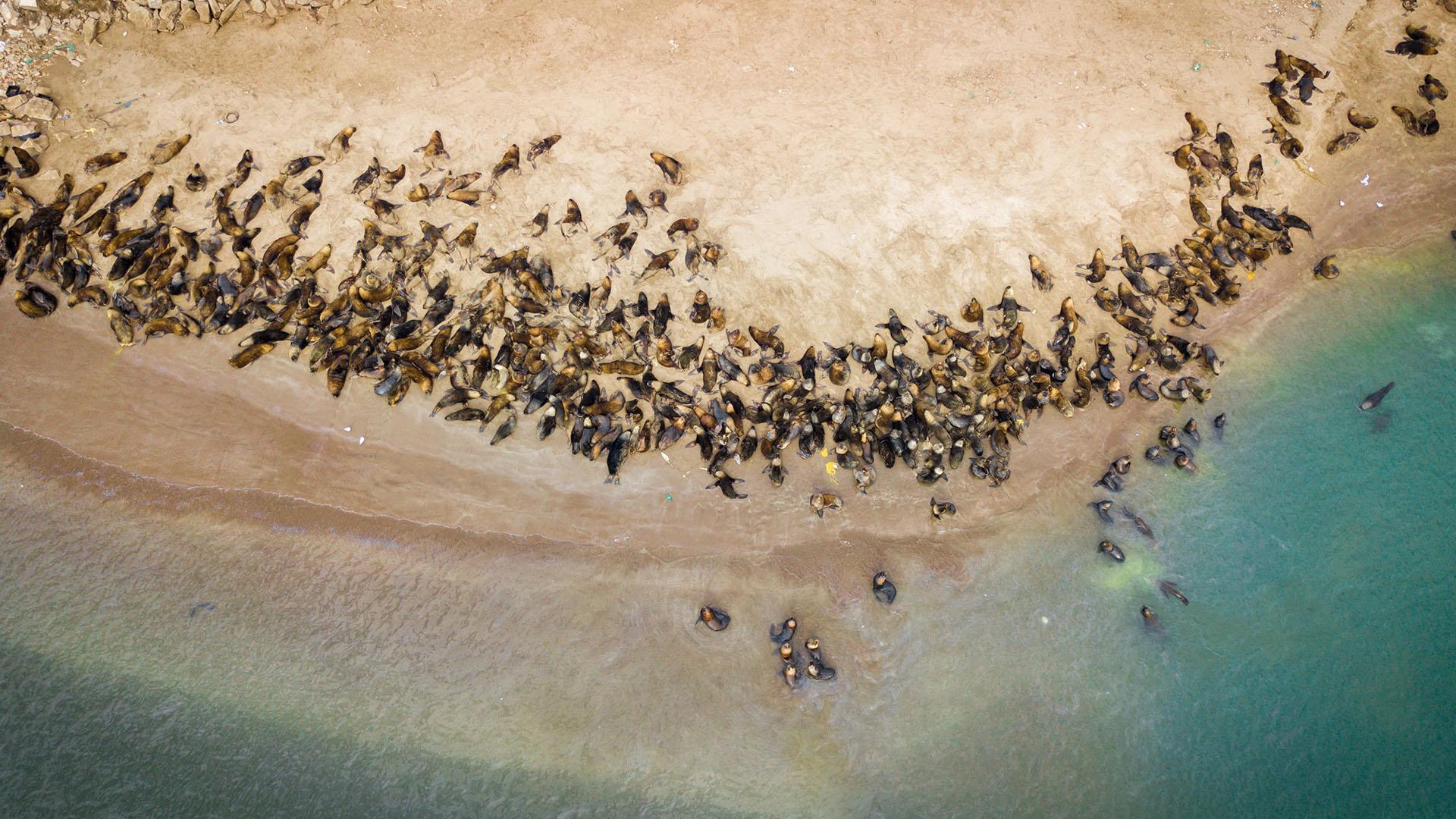 Mar del Plata posee una reserva de lobos marinos en una pequeña área protegida urbana situada en la costa marítima