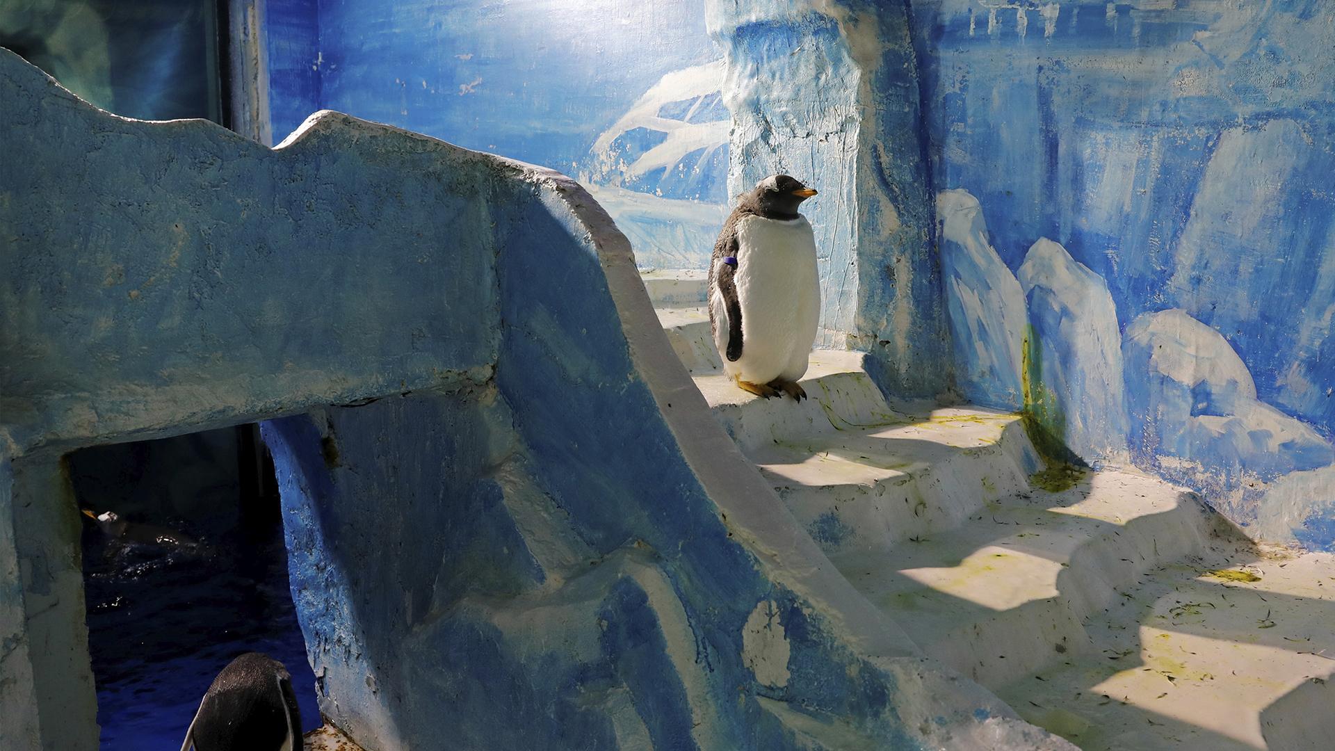 Un pingüino en la entrada de una estructura de hielo en Harbin
