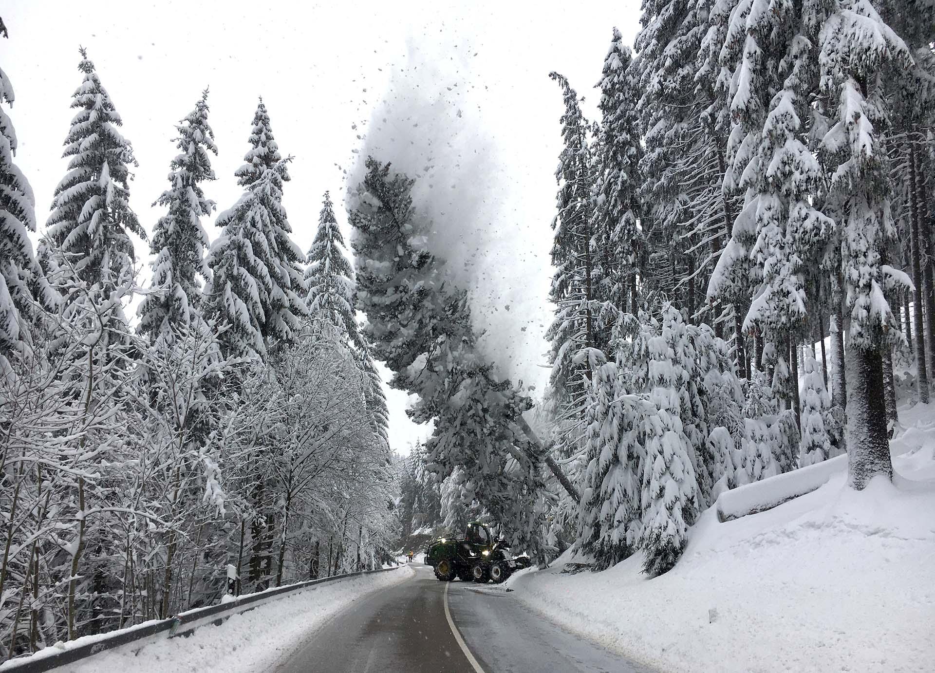 Trabajadores tiran abajo un árbol con nieve cerca de una carretera en Altenberg, Alemania (REUTERS/Oliver Barth TPX IMAGES OF THE DAY)