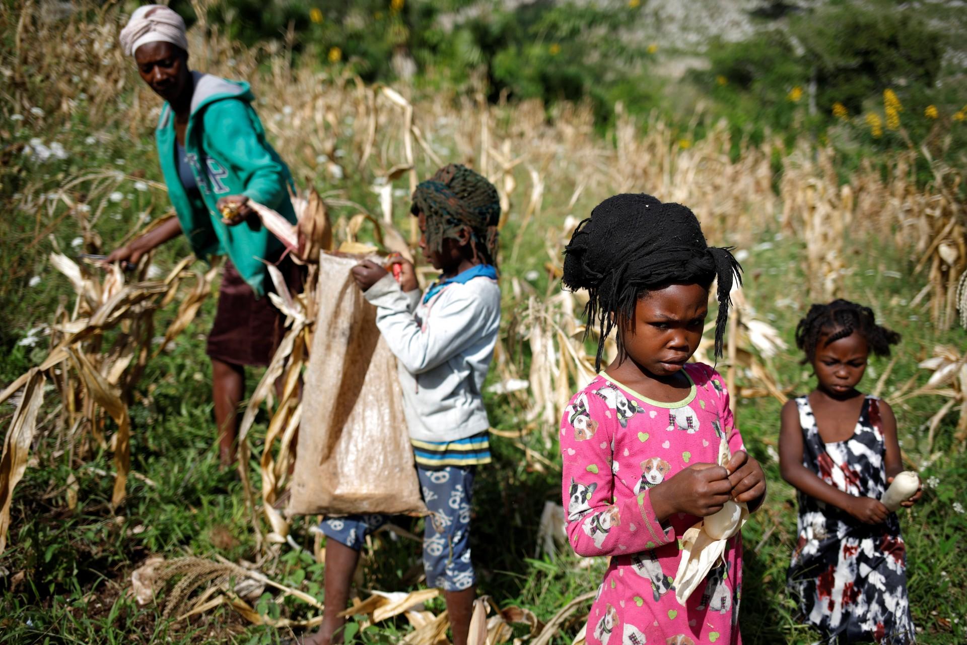 Niñas y una mujer cosechan maíz en un campo en Boucan Ferdinand, Haití, 2 de octubre de 2018.