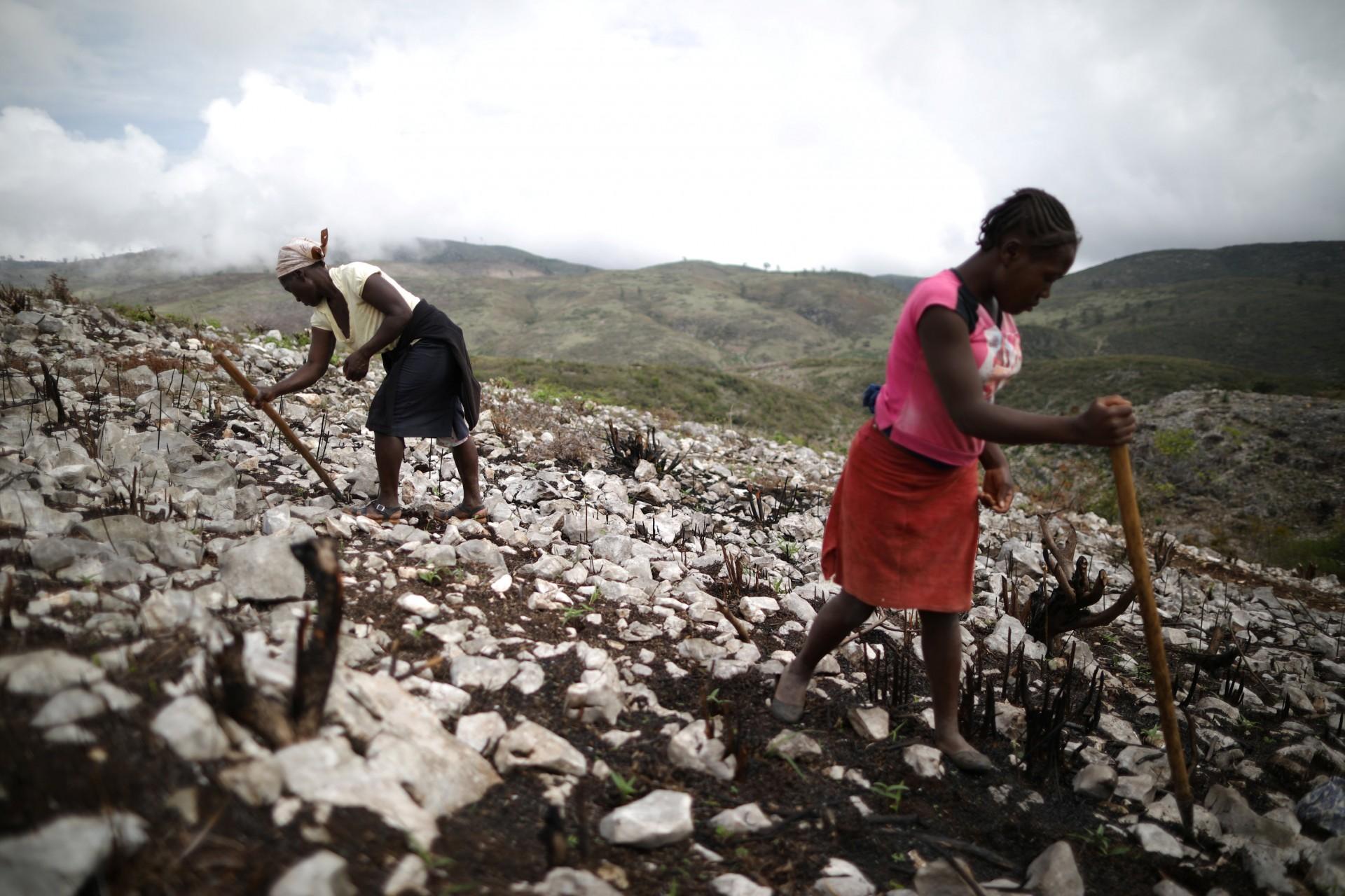 Las mujeres usan una herramienta casera para hacer agujeros y siembran semillas en un campo cerca de Boucan Ferdinand, Haití, 6 de abril de 2018.