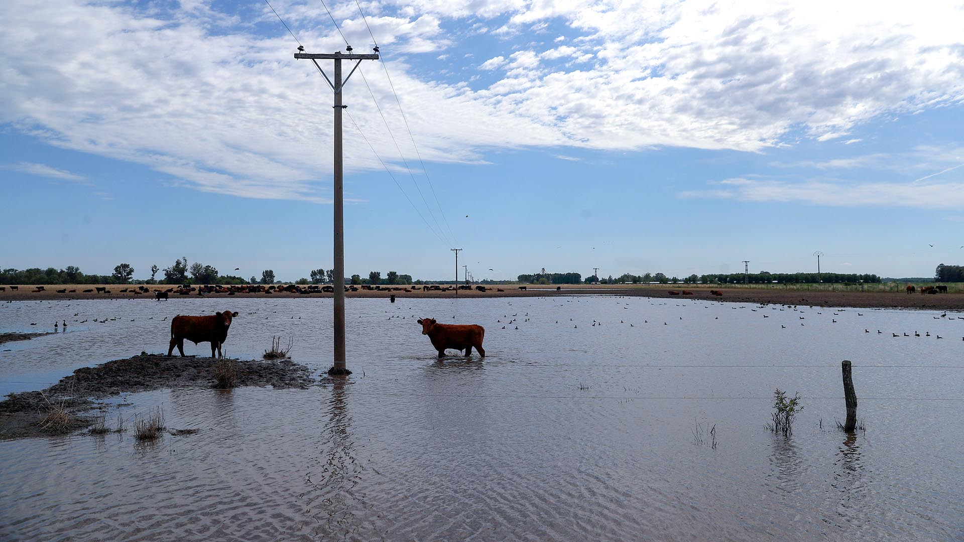En enero, 1.700.000 hectáreas se vieron afectadas por las inundaciones en Santa Fe. (REUTERS/Marcos Brindicci)
