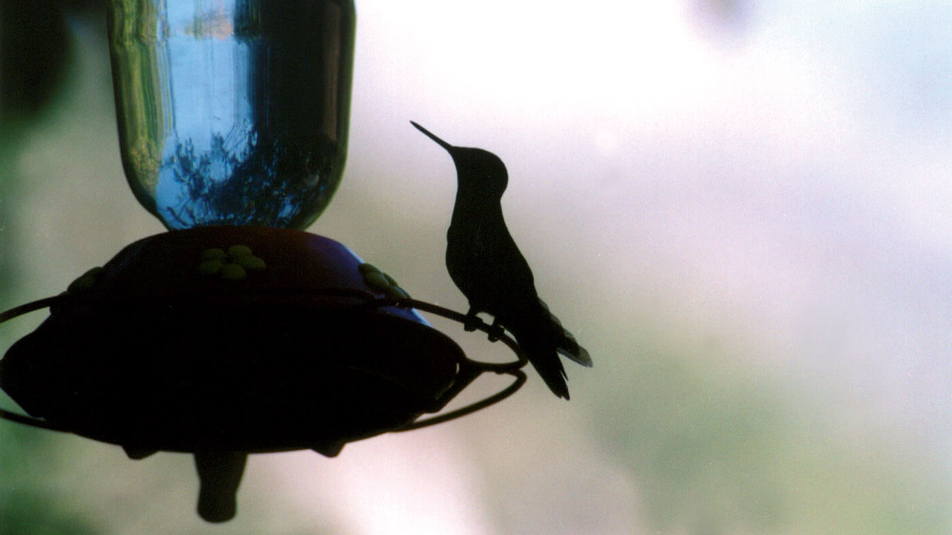 Para Inkaterra el contacto con la naturaleza es esencial en la estadía. Las cientos de especies de aves están invitadas a formar parte del viaje con dispositivos mezclados entre los viajeros