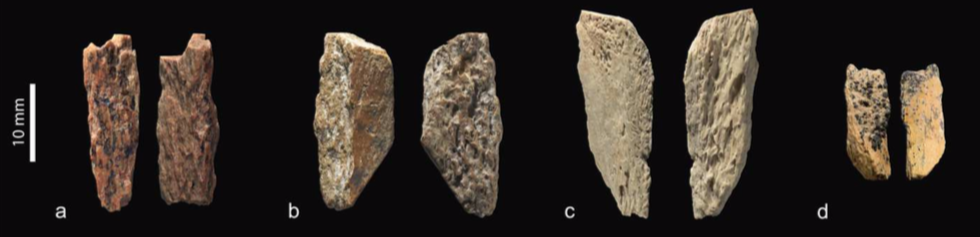 Distintos restos humanos analizados por el grupo interdisciplinario internacional (Nature)