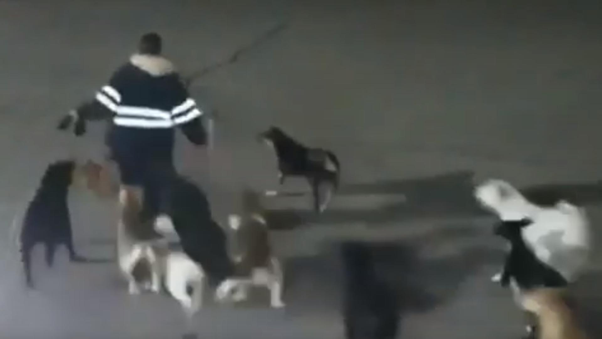 En el video sólo es posible ver a la mujer corriendo con los perros detrás, pero no se observa el momento del ataque (Foto: Captura de pantalla)