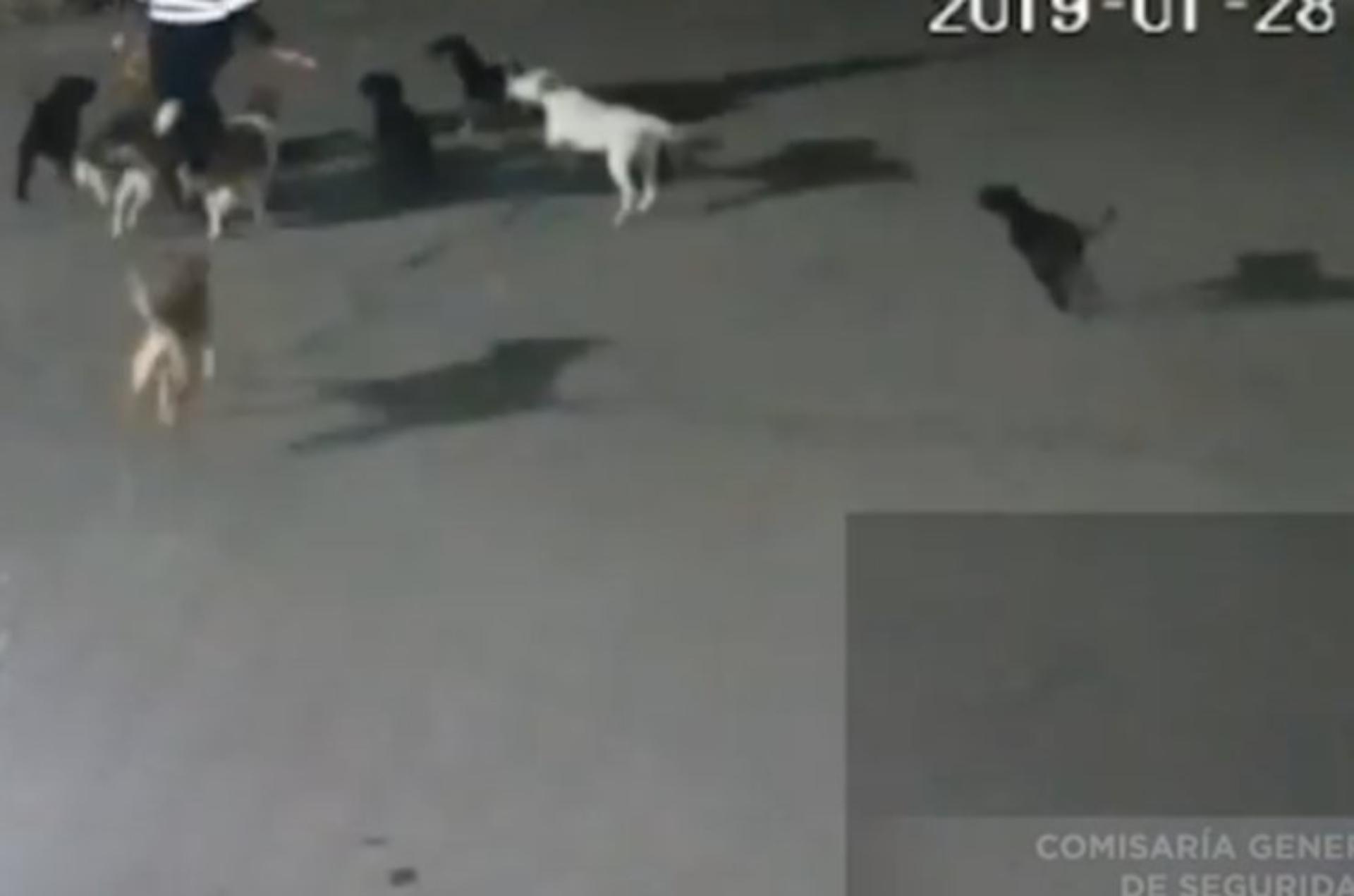 Los perros no serán sacrificados (Foto: Captura de pantalla)