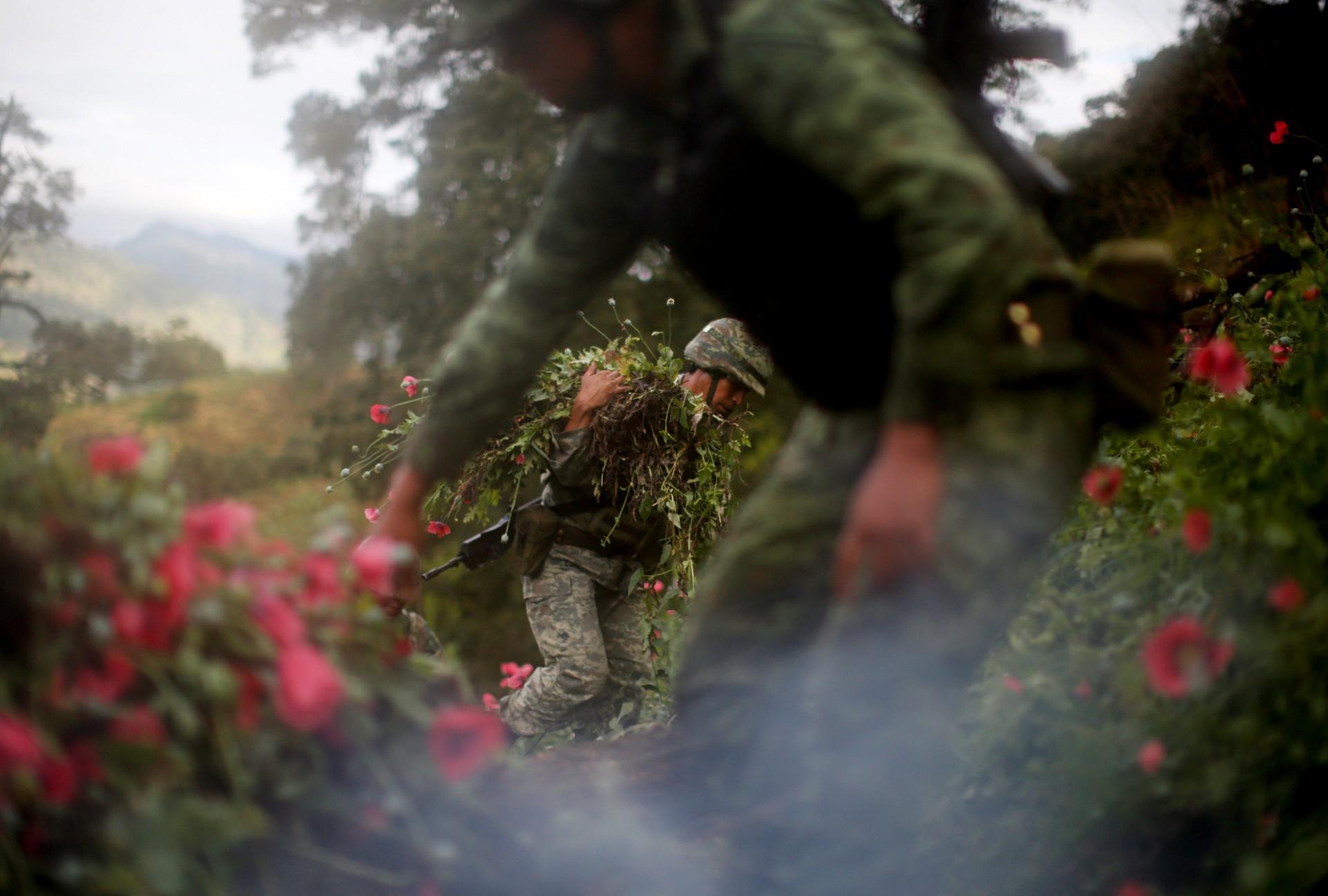 Los soldados cortan amapolas de opio mientras destruyen un campo de plantaciones ilegales en la Sierra Madre del Sur, en el estado sureño de Guerrero, México, el 25 de agosto de 2018.