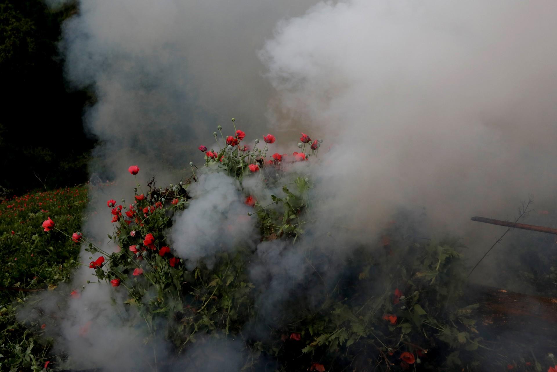 Los soldados queman una plantación ilegal de opio cerca de Pueblo Viejo en la Sierra Madre del Sur, en el estado sureño de Guerrero, México, el 25 de agosto de 2018.