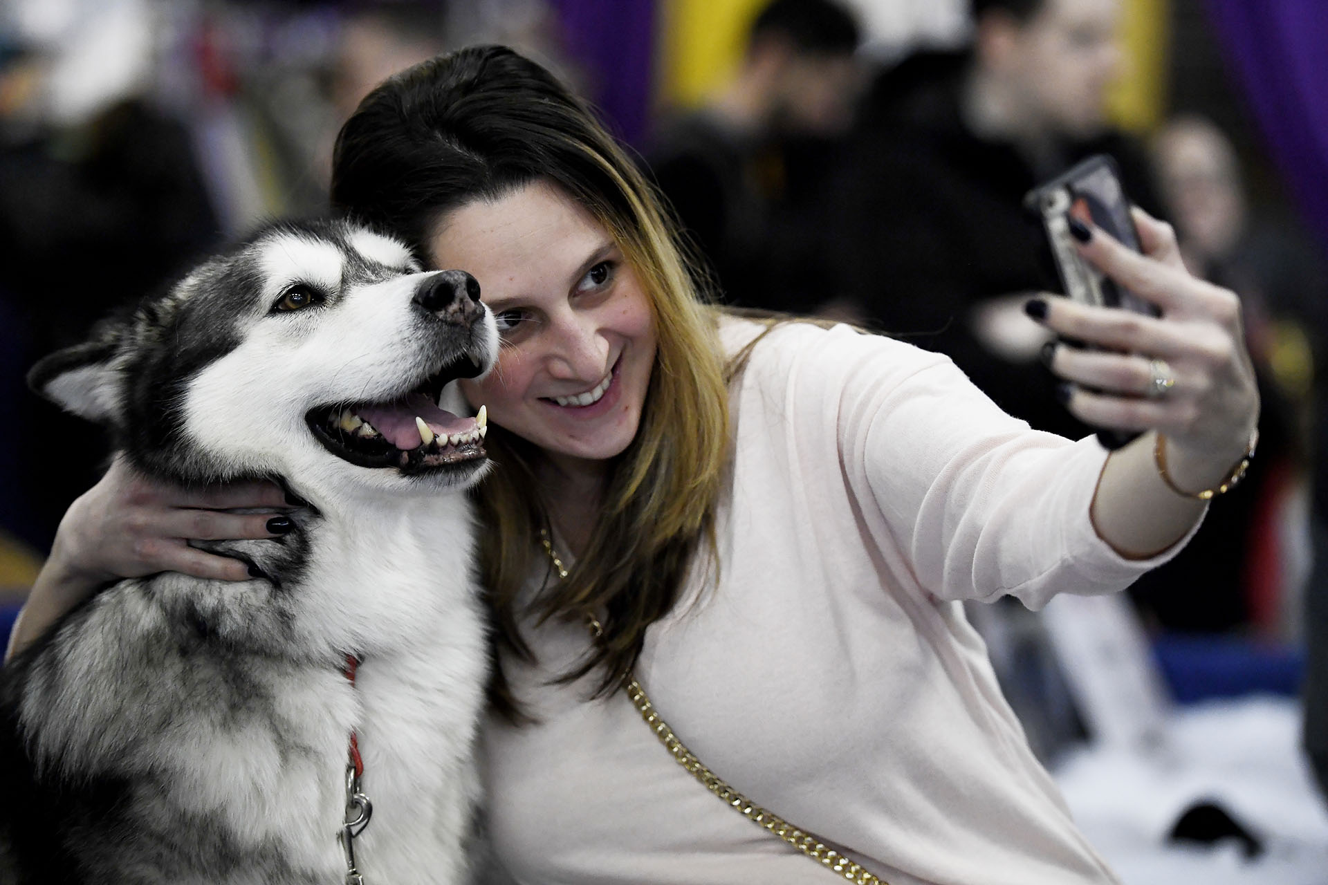 Las selfies abundaron en Nueva York. Un malamute de Alaska parece sonreír para la foto