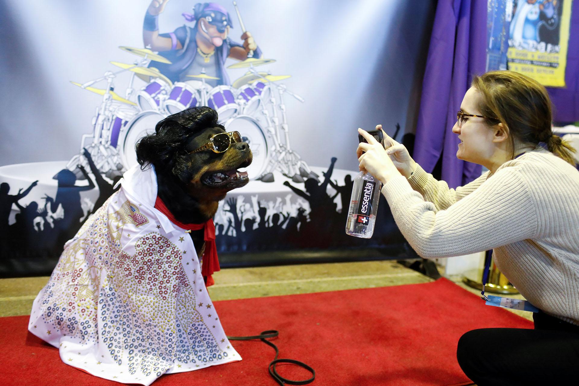 """Talos, un rottweiler, posa en la cabina """"Rottapalooza"""" de la raza, disfrazado como Elvis Presley"""