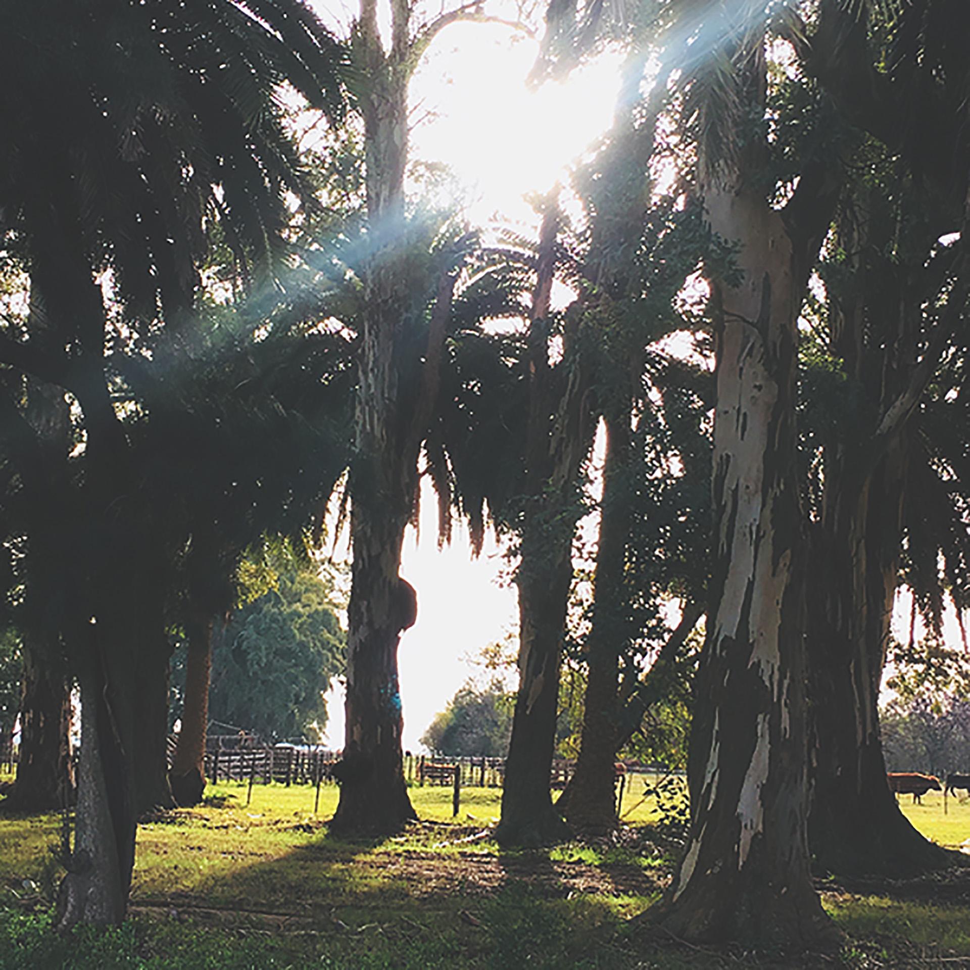 Más de 200 especies de árboles a lo largo de las hectáreas