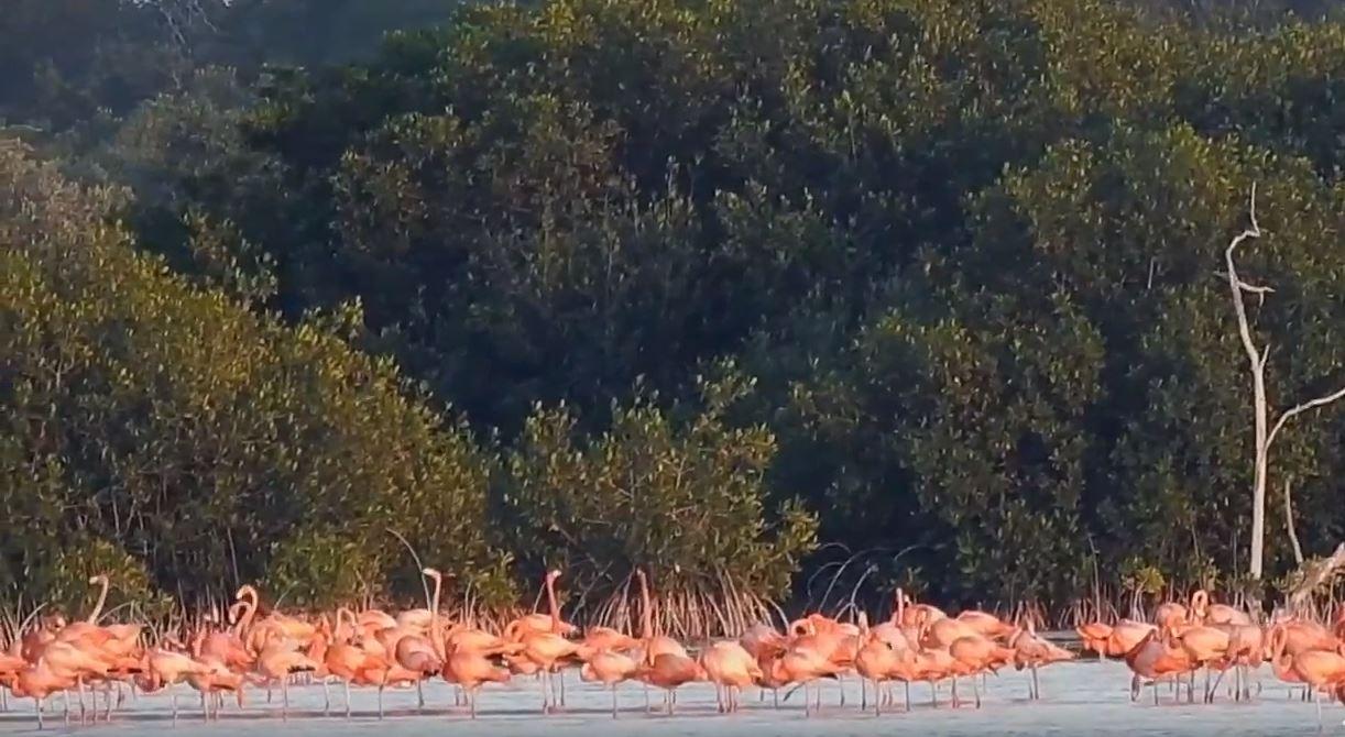 El científico de la UNAM explica que no es sencillo observar las aves con binoculares debido a que los animales se mueven constantemente (Foto: YouTube UNAM)
