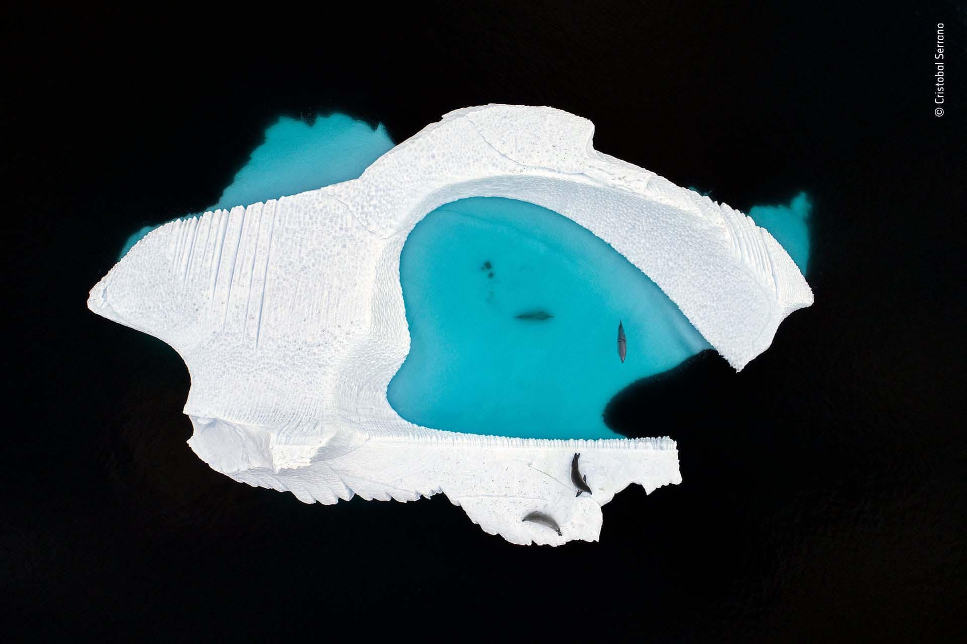 'La piscina helada': fotografía de Cristobal Serrano captó el canal Errera en la costa oeste de la Península Antártica, cuando la corriente constante lleva icebergs de todas las formas y tamaños