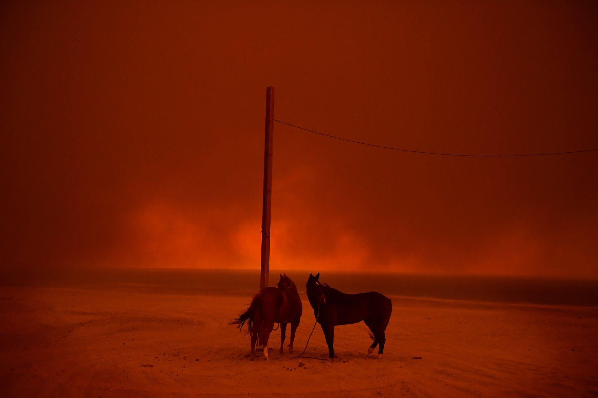 Los caballos evacuados permanecen atados a un poste, mientras el humo de un incendio forestal ondea sobre ellos, en la playa de Zuma, en Malibú, California / Foto: Wally Skalij (Los Angeles Times)
