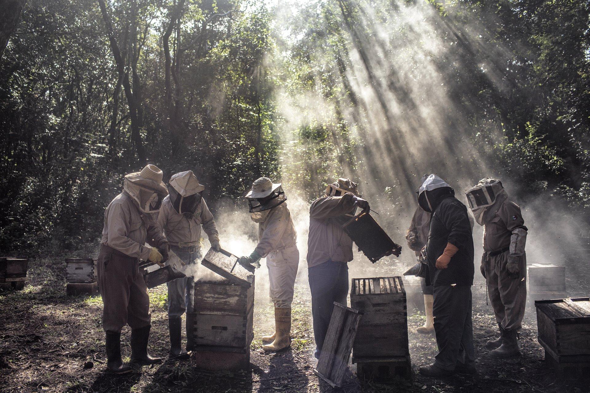 Los agricultores menonitas que cultivan soja en Campeche, en la península de Yucatán en México, supuestamente están afectando negativamente el sustento de los apicultores mayas locales. Los menonitas cultivan grandes extensiones de tierra en el área / Foto: Nadia Shira Cohen