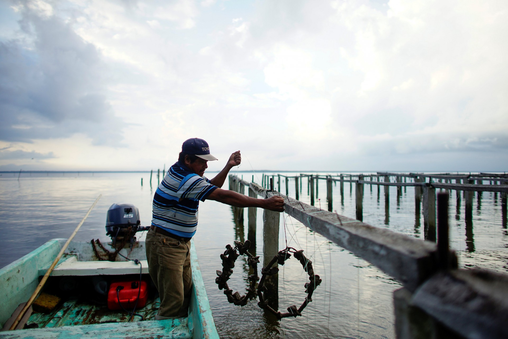 El pescador Rafael de la Cruz Hernández, de 60 años, sostiene algunas ostras en una granja de ostras en la laguna Mecoacan cerca de Paraiso, México, el 9 de diciembre de 2018.
