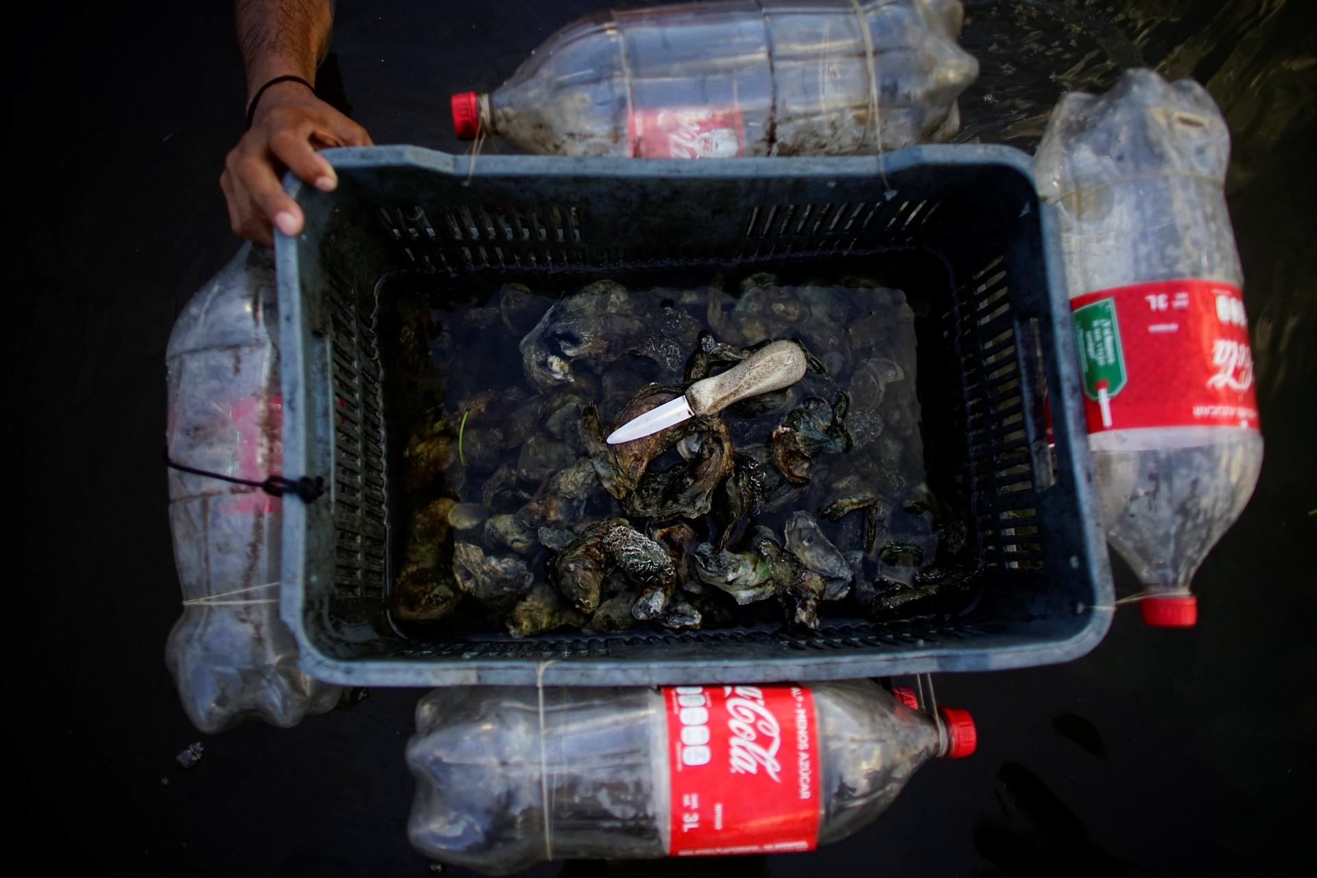 El pescador Carlos Reyes muestra una caja flotante improvisada utilizada para almacenar ostras mientras trabaja en un área de manglares en la laguna Mecoacan cerca de Paraiso, México, el 9 de diciembre de 2018.