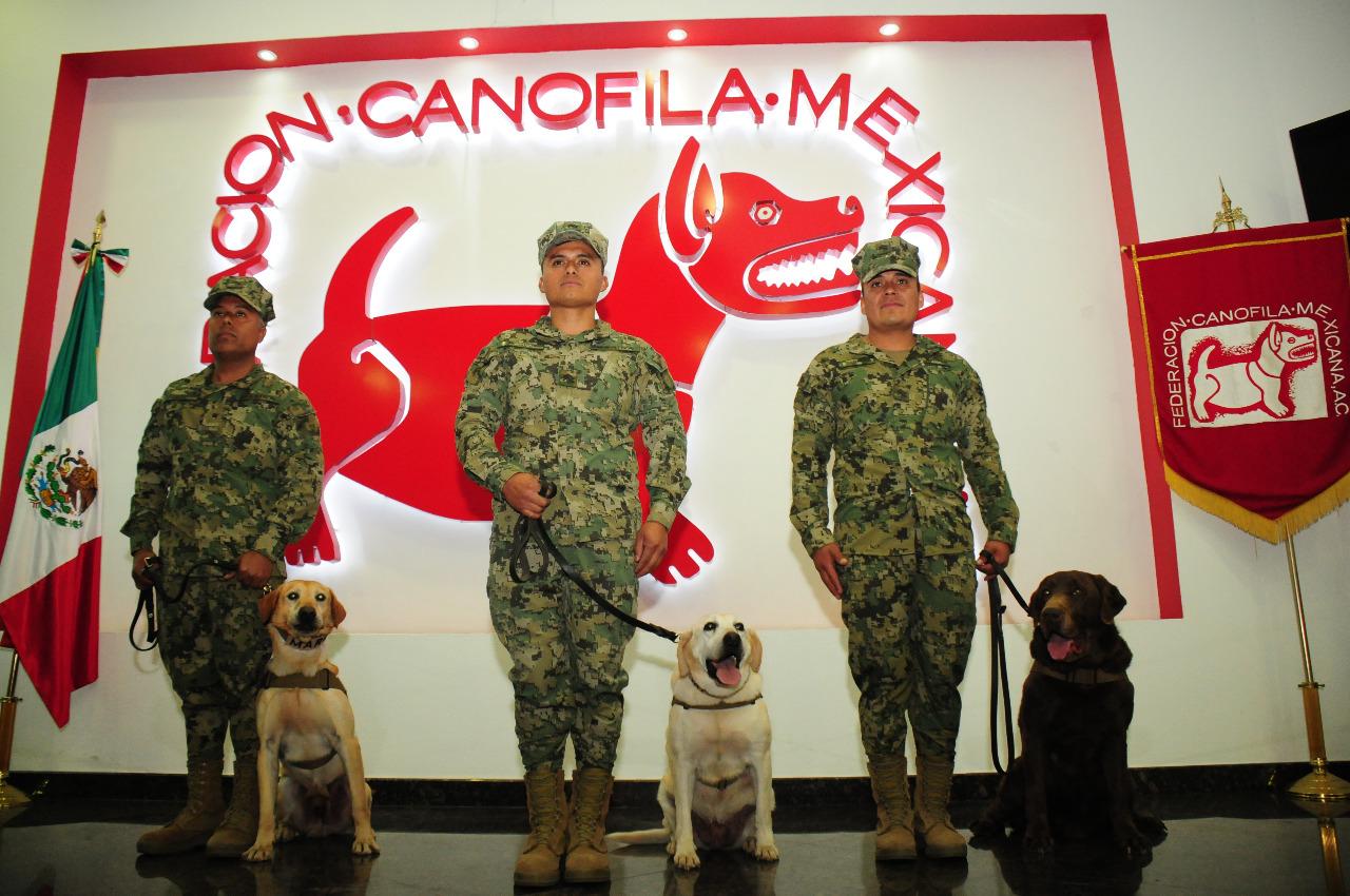 """Mateo, Keyller y Coco fueron nombrados """"Mejores perros de trabajo del año 2018"""" (Foto: Federación Canófila Mexicana A.C.)"""
