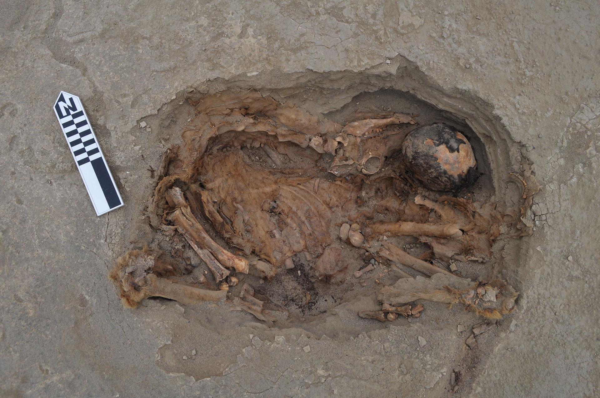 El esqueleto de una llama, mirando hacia los Andes, en el este (journals.plos.org)