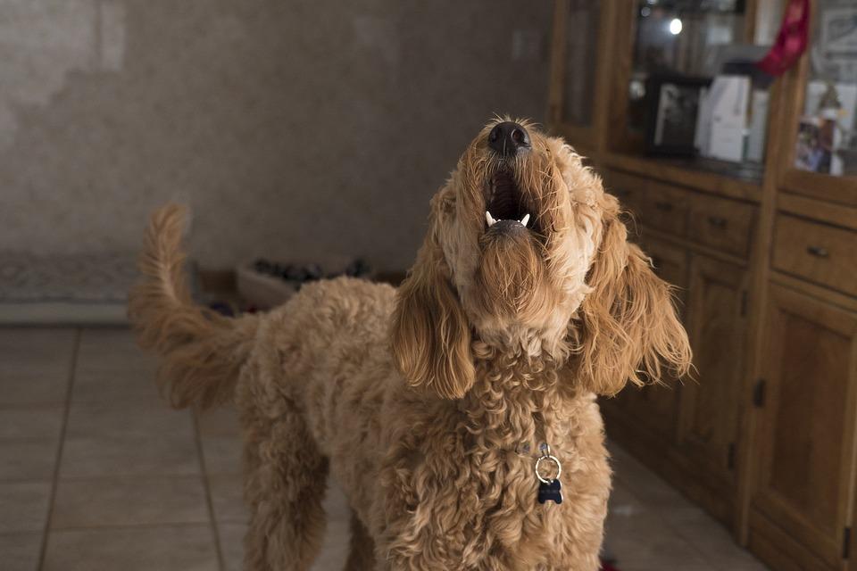 Será un juez el que establezca la pena o sanción al propietario del can (Foto: Pixabay)