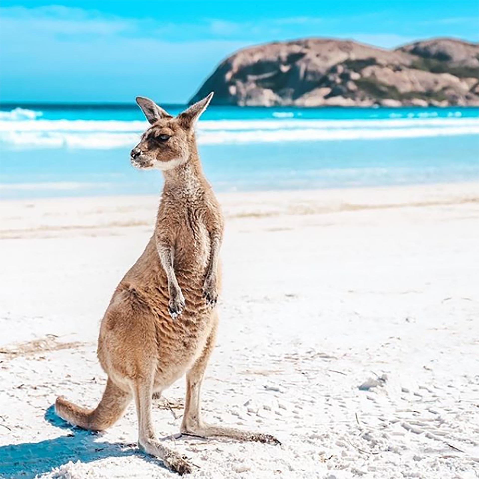 Un ranking llegó a la conclusión que Australia era el país más instagrameable del 2019 (@Australia)