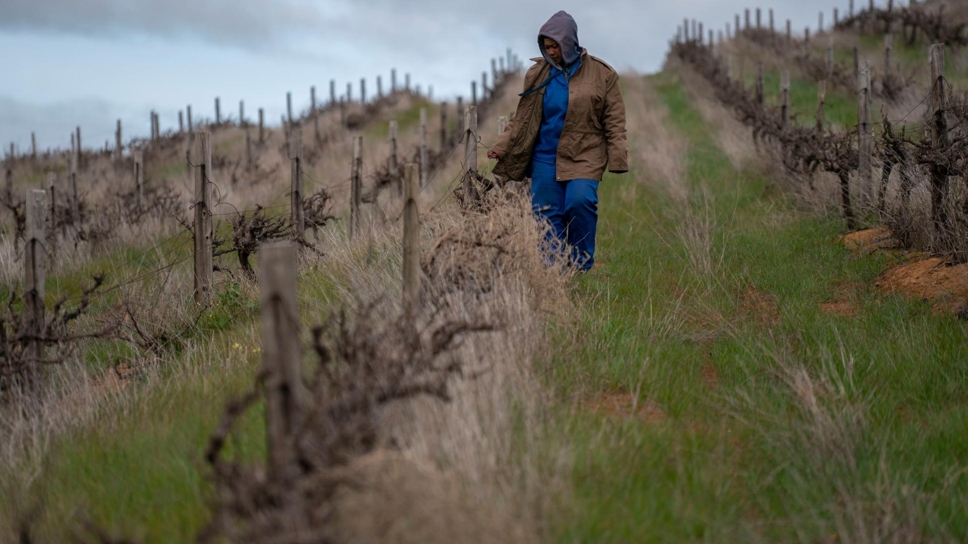 Erigiendo una choza en la región de Stellenbosch, la cual tiene fama por su vino. (Joao Silva/The New York Times)