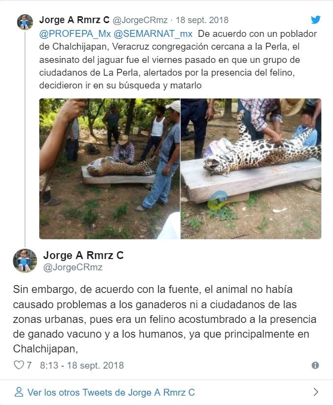 denuncia jaguar