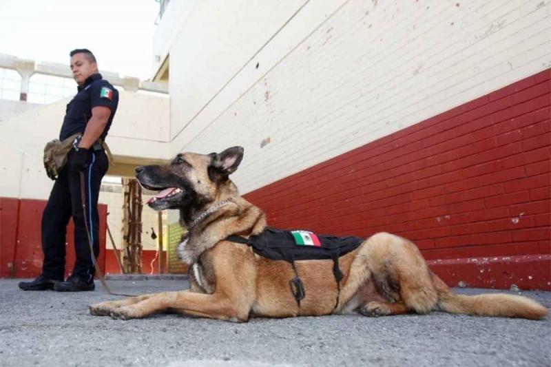 """""""Capo"""" se retira a sus casi 11 años, a diferencia de otros oficiales caninos que suelen jubilarse a los ocho (Foto: Gobierno de Ecatepec de Morelos)"""