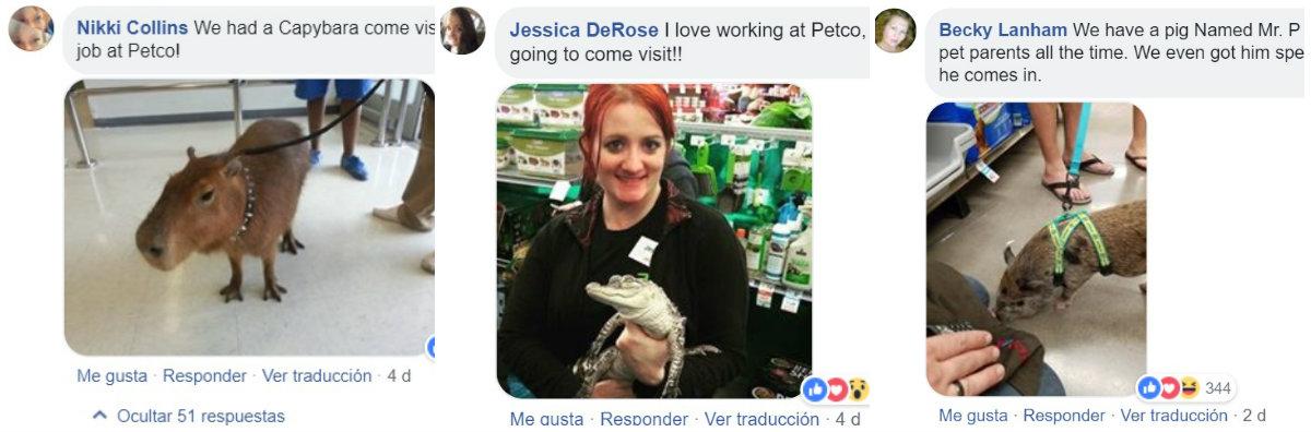 Usuarios de redes presumieron su amor por sus mascotas cuando también las llevaron a pasear a la tienda, eso sí, con correa Fotos: (Facebook)