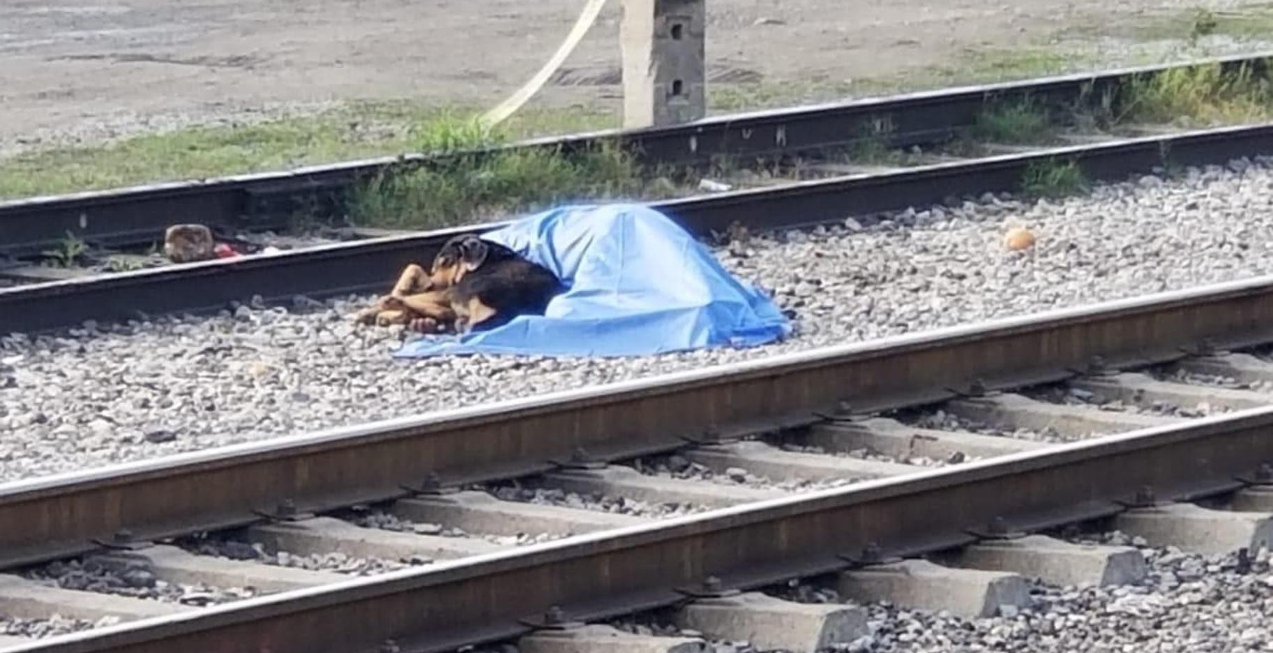 Un hombre de 57 años fue arollado por el tren en la Vía Tampico y calle Escobedo, en el Barrio La Estación, en Montemorelos, Nuevo León, sin embargo el perro fiel no quertía separarse de su lado a pesar de que había muerto Foto: (Facebook)