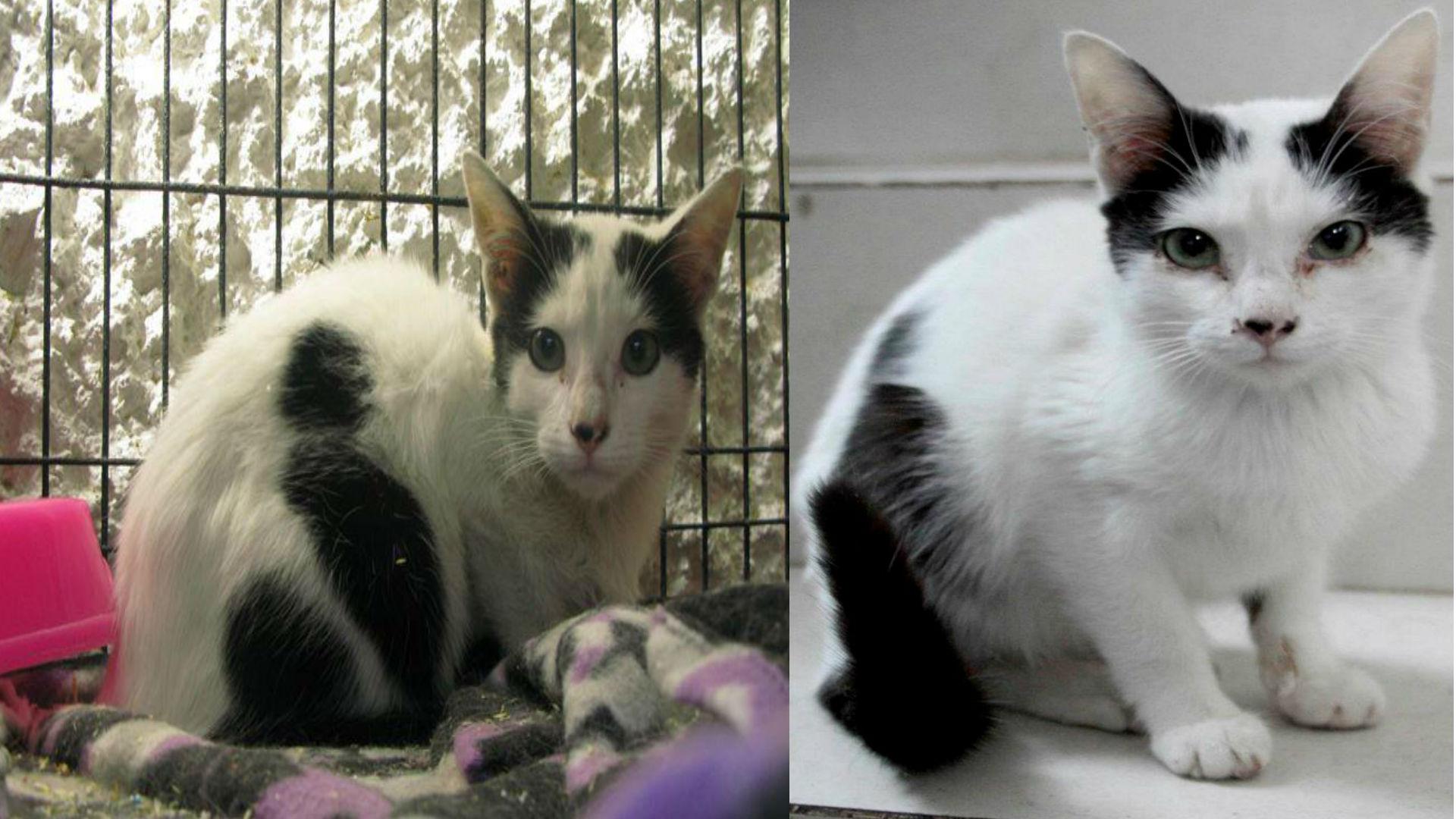 El caso de esta gatita tuvo un final triste (Foto: especial)