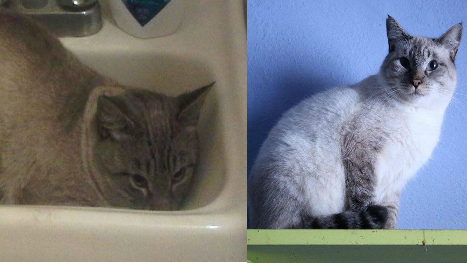 Este gato obtenía su comida en botes de basura (Foto: Especial)