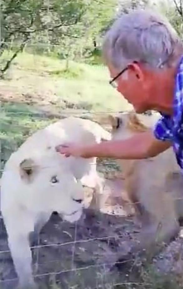 La leona que atacó a Pietr Nortje (Foto: Captura de pantalla)