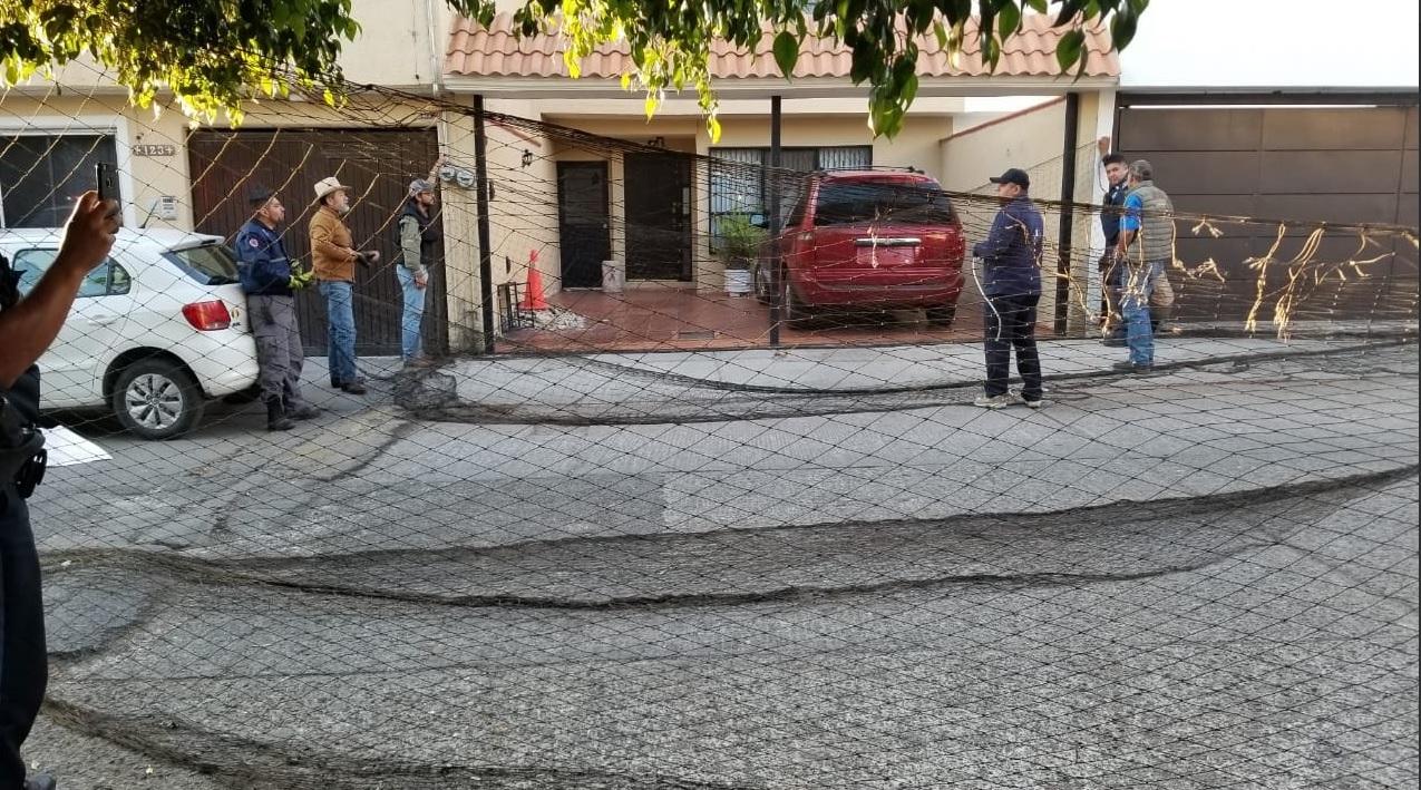 Las autoridades protegieron el exterior del domicilio para impedir que el felino escapara (Foto: SSP_SLP)
