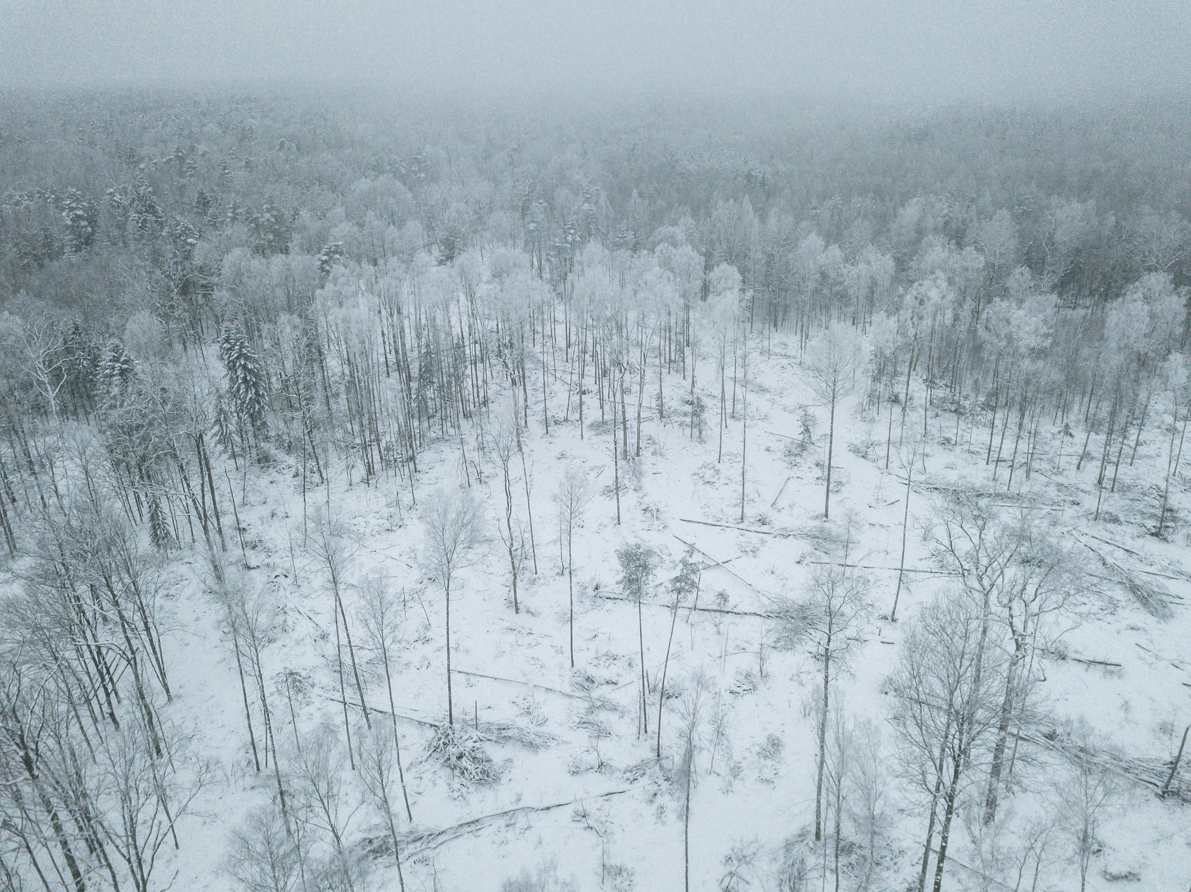Ha pasado más de un año desde que se ordenó detener la tala en el bosque de Bialowieza, pero las cicatrices todavía son visibles. (Andrea Mantovani/The New York Times)