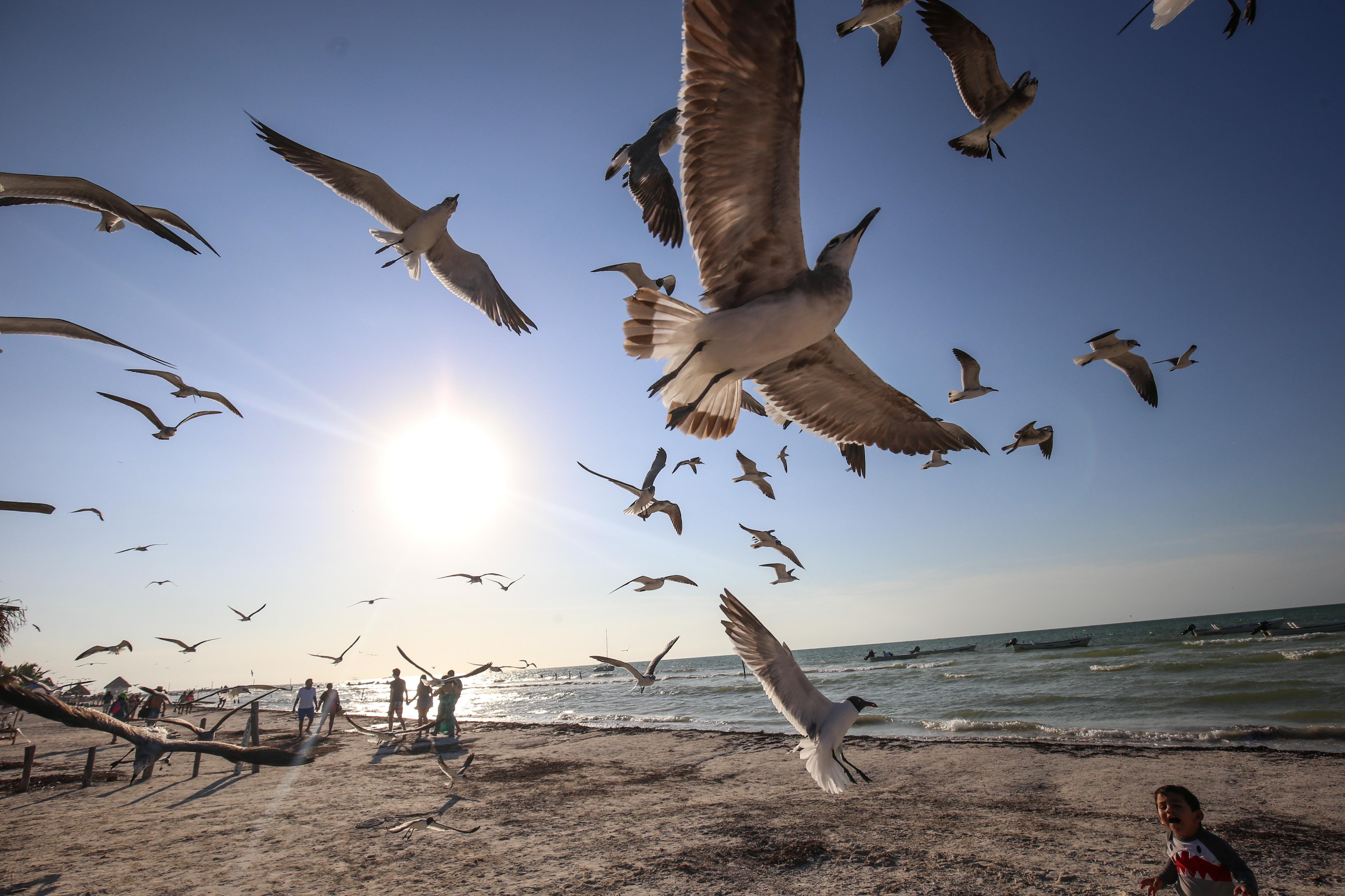 HOLBOX, QUINTANA ROO- Niños juegan con las gaviotas en la playa, muchas personas aprovecharon el fin de semana largo para salir a los diferentes destinos turísticos del país. FOTO: ELIZABETH RUIZ /CUARTOSCURO