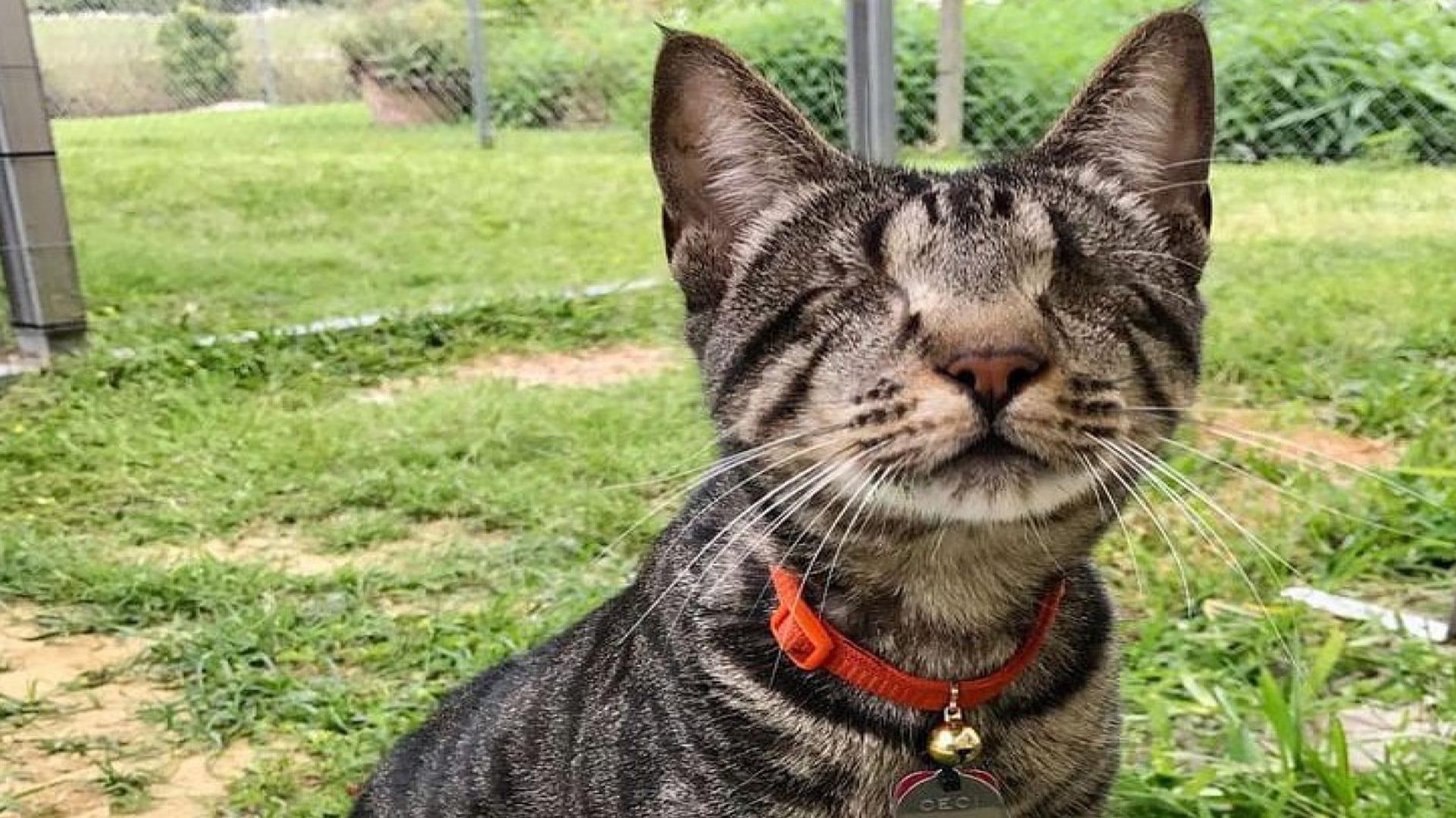 Los gatos con ceguera pueden adaptarse fácilmente (Foto:@cats.sads/ Instagram)