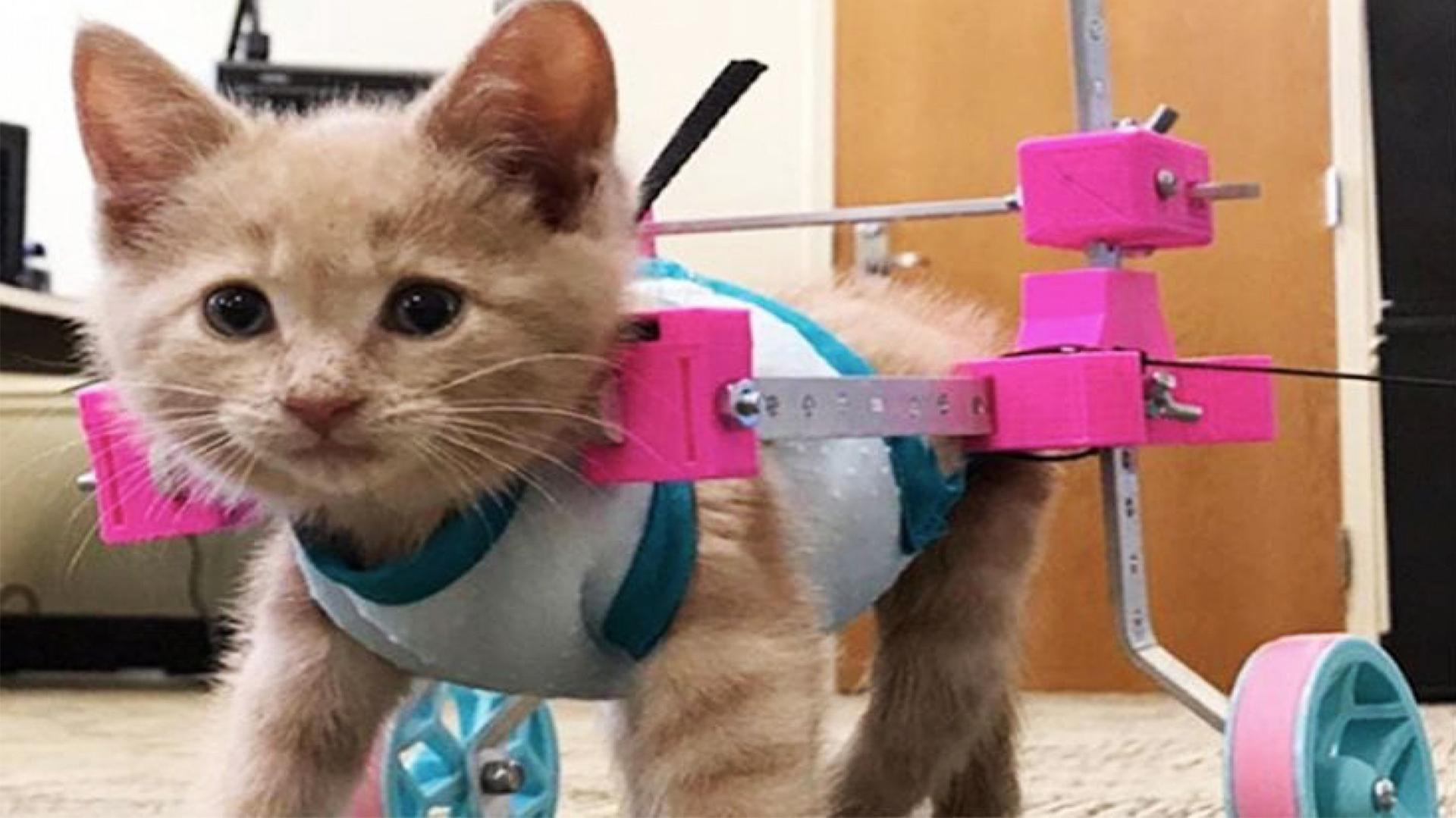 Los mininos que aparecen en esta cuenta han tenido que superar muchas adversidades (Foto:@cats.sads/Instagram)