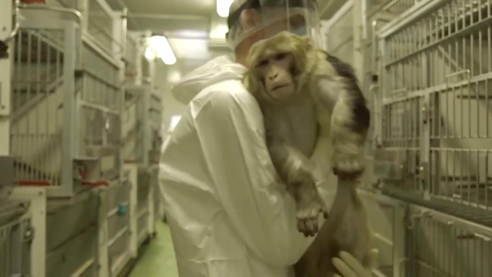 En La Afirman Animales Que MiraLos Experimentos Con Datos Yf76Ibgyv