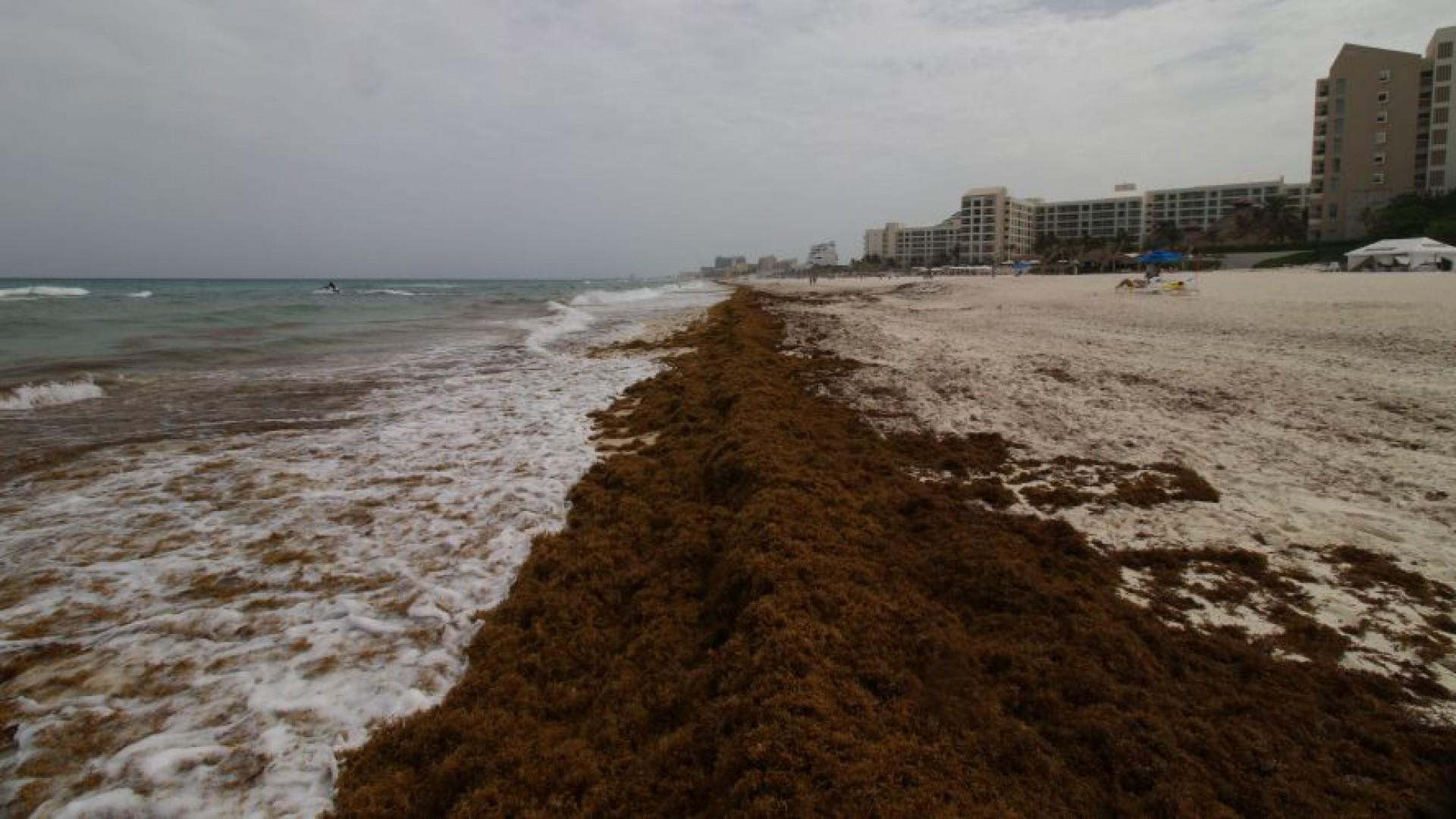 La costa quintanarroense está en deterioro (Foto: Red de Monitoreo de Sargazo en Cancún)