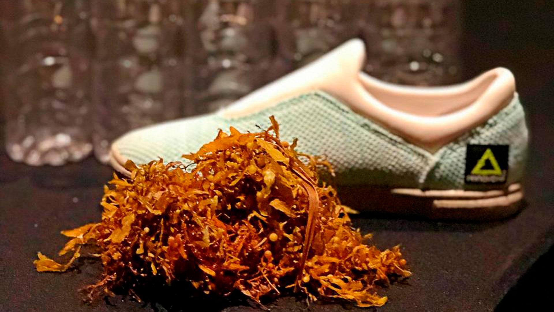 El grupo de emprendedores logró añadir sargazo a al suela del calzado deportivo (Foto: cortesía)