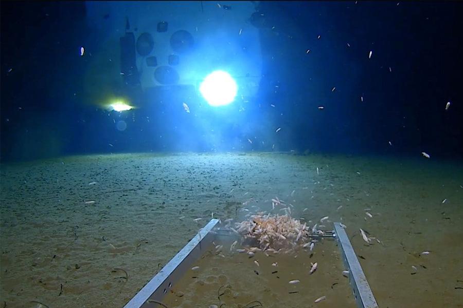 Criaturas marinas nadan alrededor de un módulo de aterrizaje sumergible, iluminado por la luz del submarino DSV Limiting Factor, en el fondo de la Fosa de las Marianas del Océano Pacífico. Imagen fija del video publicado por Discovery Channel (Foto: Discovery Channel/Reuters).