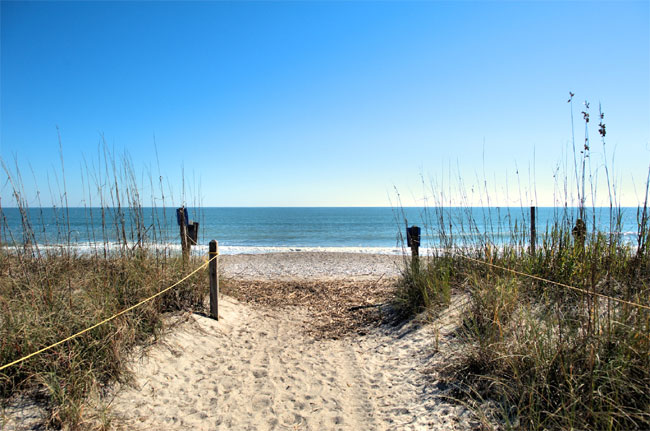 El rastreador de Caroline indicó que nadaba cerca de Edisto Beach, en Charlestone (Foto: especial)