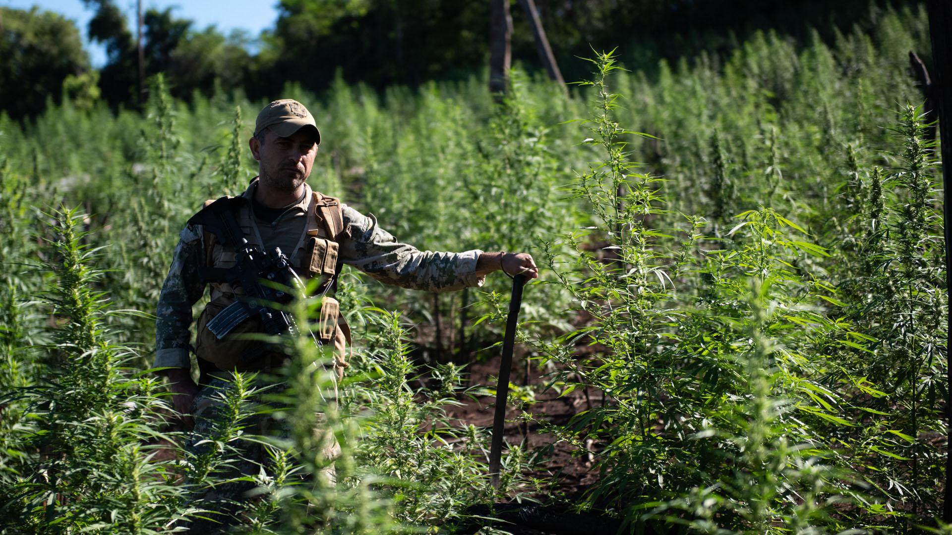 Los cosecheros, armados con pistolas y revólveres viejos, suelen huír ante las fuerzas especiales paraguayas. Encontrarlos es sumamente difícil. La frontera con Brasil se cruza a pie.